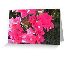 Pink Peace Two Greeting Card