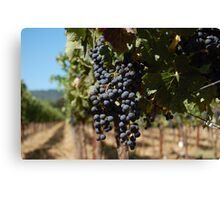Grapes at Napa Vineyard Canvas Print