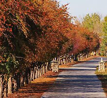 Pleasant Lane by trueblvr