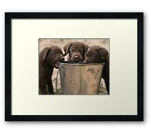 The Bucket Brigade Framed Print
