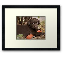 Bumper Buddy Framed Print