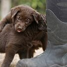 Pup & Boots by Bill Maynard