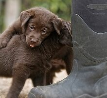 Pup & Boots by Bill Maynard