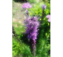 Liatrus - Welcome Dreaming Photographic Print