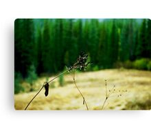 Dew Plant Canvas Print