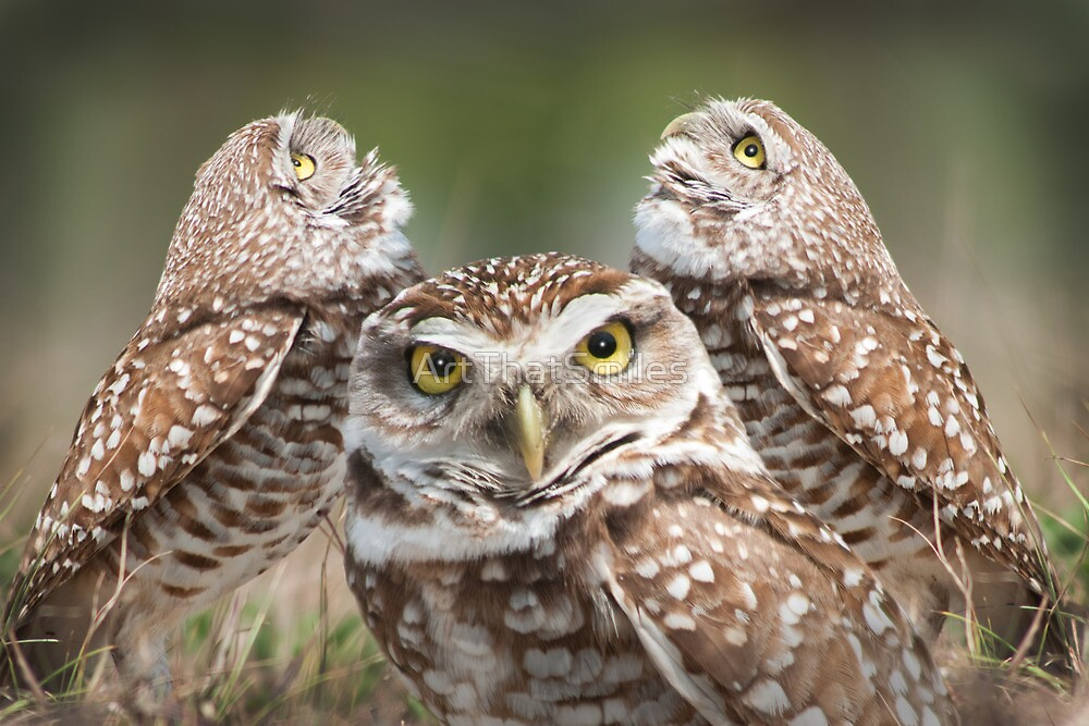 """""""The Eyes Have It"""" - burrowing owls by ArtThatSmiles"""
