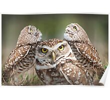 """""""The Eyes Have It"""" - burrowing owls Poster"""