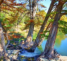 Guadalupe Cypress by Savannah Gibbs