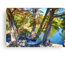 Guadalupe Cypress Canvas Print