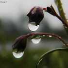 Raindrops by Judi Rustage