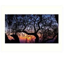 Sunrise through a tree Art Print