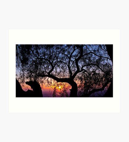 Sunrise through a tree Art Print
