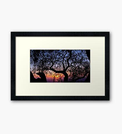 Sunrise through a tree Framed Print