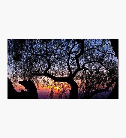 Sunrise through a tree Photographic Print