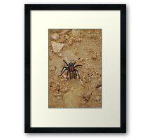 oz spider Framed Print