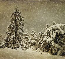Winter's Wrath by Lois  Bryan