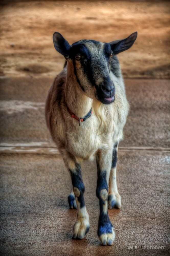 The Little Goat  by Saija  Lehtonen