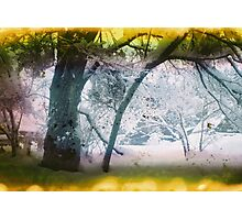 Warm as Snow Trilogy #1 Photographic Print