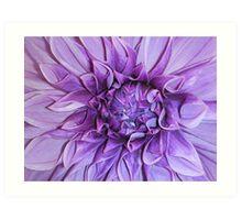 Purple Flower... Art Print