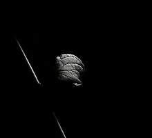 Plant in the dark by pulen