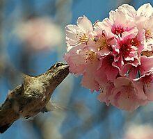 Sweet Nectar by saseoche
