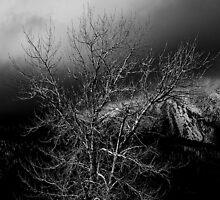 Storm by Jeffrey  Sinnock