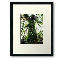 In The Rainforest  Framed Print