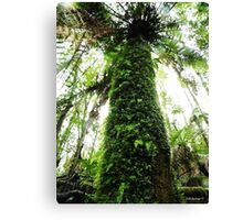 In The Rainforest  Canvas Print