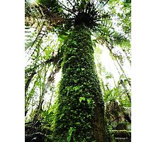 In The Rainforest  Photographic Print
