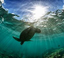 Dramatic turtle silhouette HDR by Flux Photography