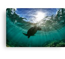 Dramatic turtle silhouette HDR Canvas Print
