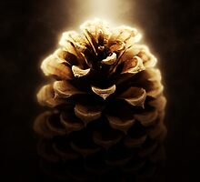 Pine Cone by winchesterred