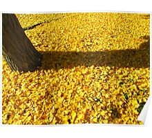 Yellow Leaves, Everywhere! Poster