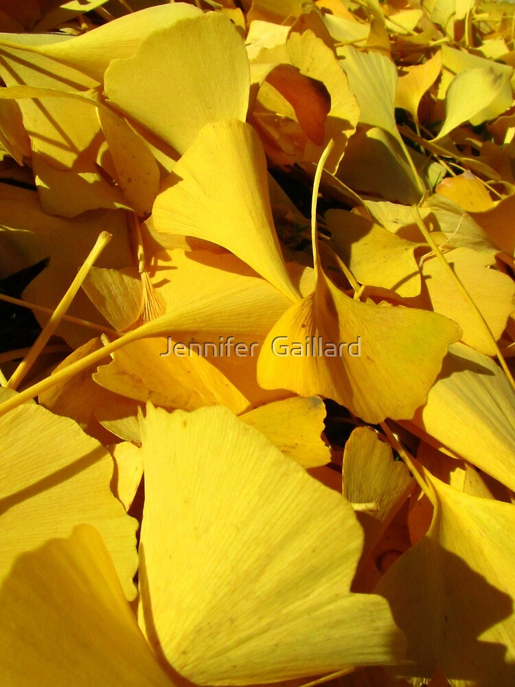 Yellow Leaves, Everywhere! by Jennifer  Gaillard