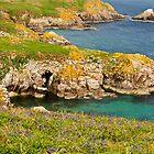 bluebells on Saltee Island, County Wexford, Ireland by Andrew Jones