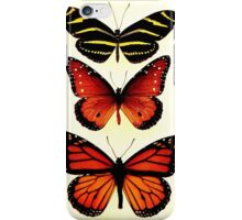 Zebra and Milkweed Butterflies, 1904 iPhone Case/Skin