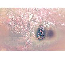 Sakura Seep Photographic Print