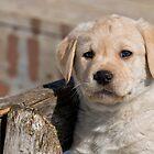 Cute As Can Be by Bill Maynard