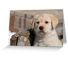 Cute As Can Be Greeting Card