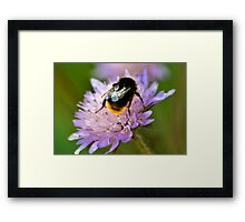 Collecting Nectar Framed Print