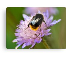 Collecting Nectar Metal Print