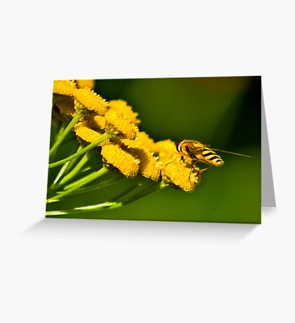 Seeking the Nectar Greeting Card