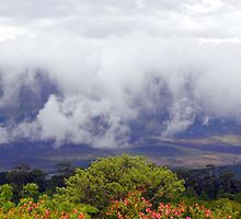 Cloudy above the trees ~ mountain fog by Pieta Pieterse