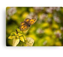 Gatekeeper Butterfly #2 Canvas Print