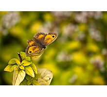 Gatekeeper Butterfly #2 Photographic Print
