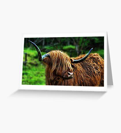 Highland Coo. Greeting Card