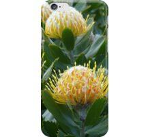 Yellow Waratah Flowers iPhone Case/Skin