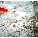 Winter song by signore