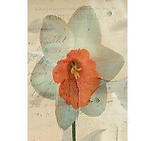 Narcissus ©  Photographic Print
