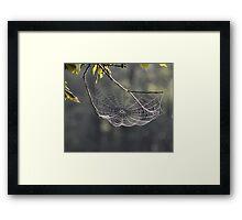 Tennessee Spider Web Framed Print